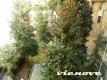 3.1.2 vienove appartamento san giovanni villa fiorelli