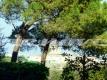 1.5 appartamento Piccolomini Roma Vienove